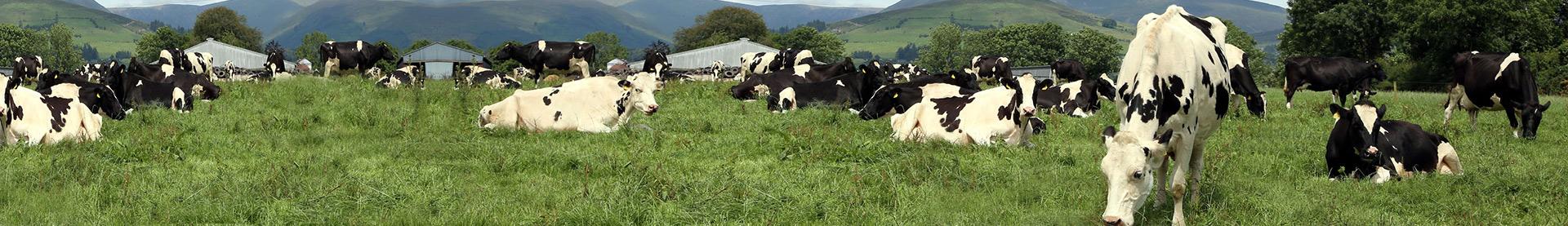 Munster Cattle Breeding Group
