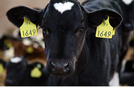 Herd Health